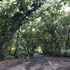 Hawaii Tropical Botanical Garden User Photo