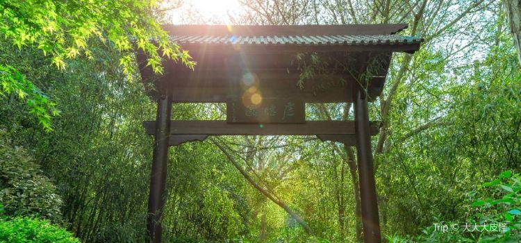 泉山森林公園1