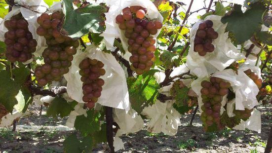 靈樹葡萄園