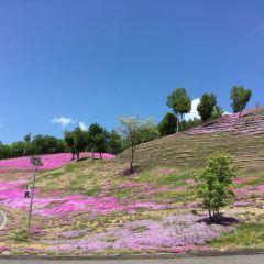 Shibazakura Takinoue Park User Photo