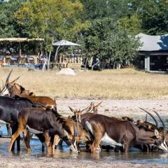 甘果野生動物牧場用戶圖片