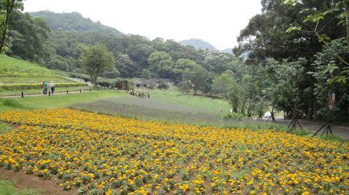 Daxi Blooming Oasis