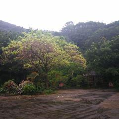 삼채곡 삼림공원 여행 사진