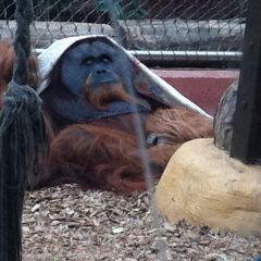 多特蒙德動物園用戶圖片