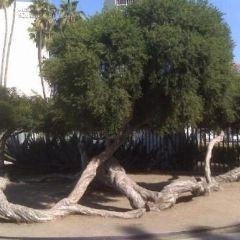 拉布雷亞公園用戶圖片