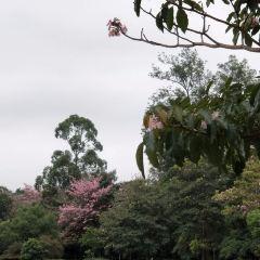 Ibirapuera Planetarium User Photo