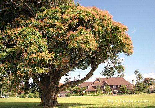 Kilohana Plantation Estate1