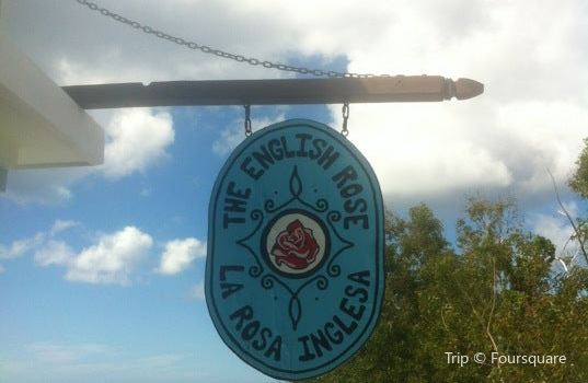 The English Rose / La Rosa Inglesa3