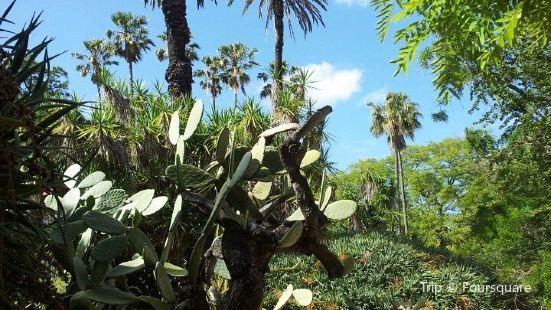 Jardim Botanico Da Universidade De Lisboa