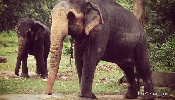 Millennium Elephant Foundation3