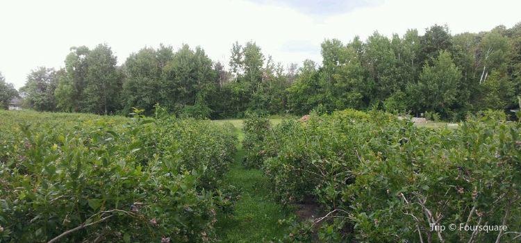 Buchan's Blueberry Hill3