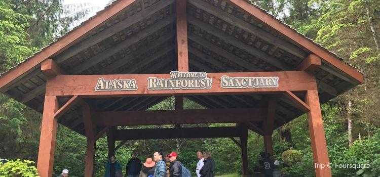 Alaska Rainforest Sanctuary1