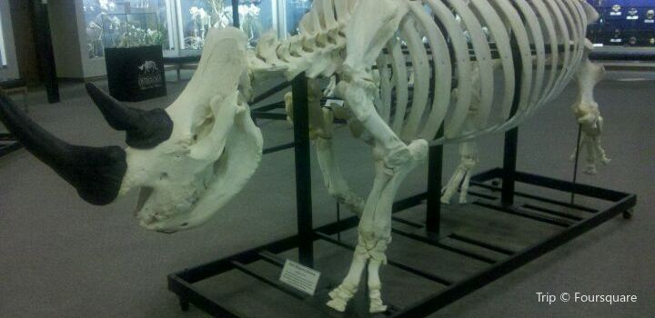 Museum of Osteology2