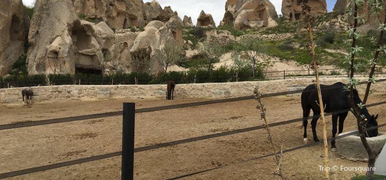 Moonlight Horse Ranch