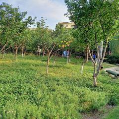 荷香洲公園用戶圖片