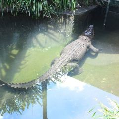 Cairns Wildlife Dome User Photo