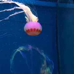 South Ocean Jellyfish Kingdom User Photo