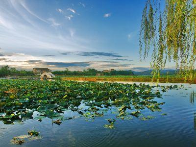 Ten Miles Lotus Pond