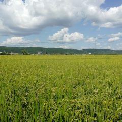 龍山朝鮮族民俗村用戶圖片