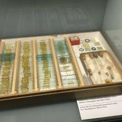 Mendel Museum of Genetics User Photo