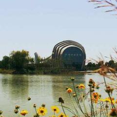 Hongze Lake Wetland and Hot Spring Resort User Photo