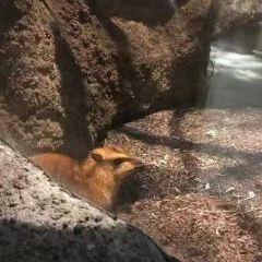 克利夫蘭動物園用戶圖片
