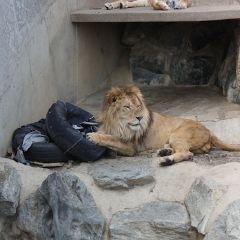 日立市かみね動物園用戶圖片