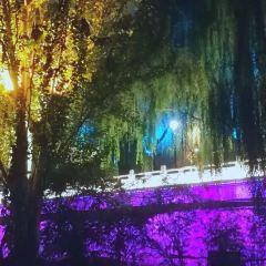 濱河路綠色長廊用戶圖片