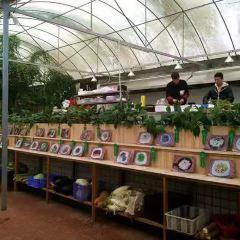 蘭園生態農莊用戶圖片