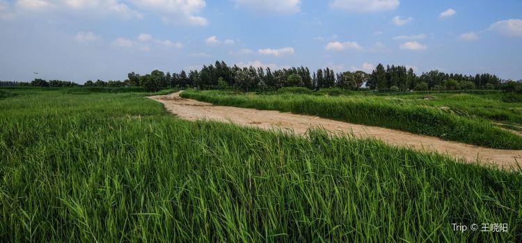 Jinan Huanghe River Forest Park