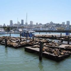 Sea Lion Center User Photo