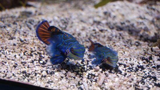 斯坦哈特水族館
