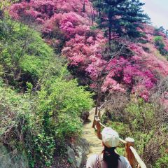 목란 운문산 여행 사진