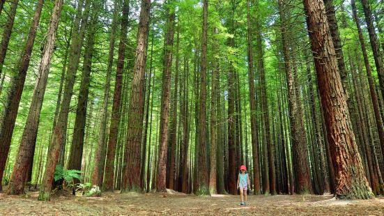 紅木森林公園