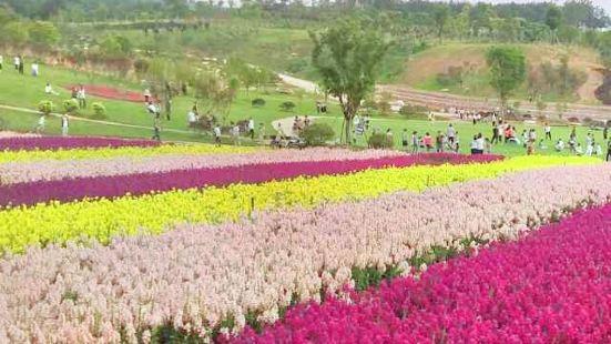 天漢絲路花海生態旅遊景區