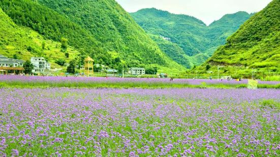 Sea of Flowers in North Guizhou