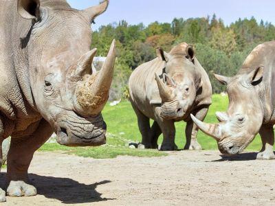 聖地亞哥野生動物園