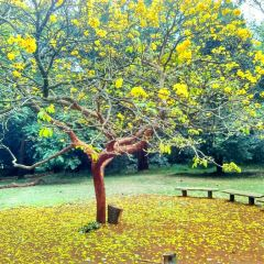 Nairobi Arboretum用戶圖片