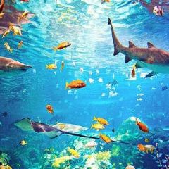 市中心水族館用戶圖片
