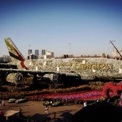 두바이 가든 글로우 여행 사진