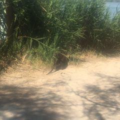 卡馬格濕地公園用戶圖片
