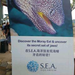 S.E.A. Aquarium User Photo