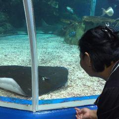 Manila Ocean Park User Photo