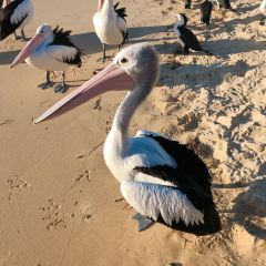 Moreton Island User Photo