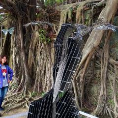 Anping Tree House User Photo