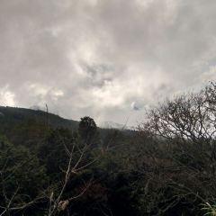 阿里山國家風景區用戶圖片