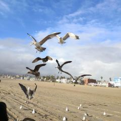 Venice Beach User Photo