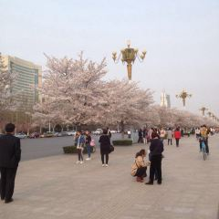 Renmin Square User Photo