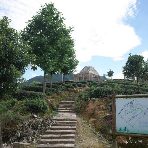 松陽大木山騎行茶園景區