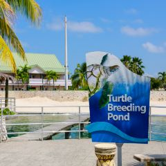 Grand Cayman Turtle Farm User Photo
